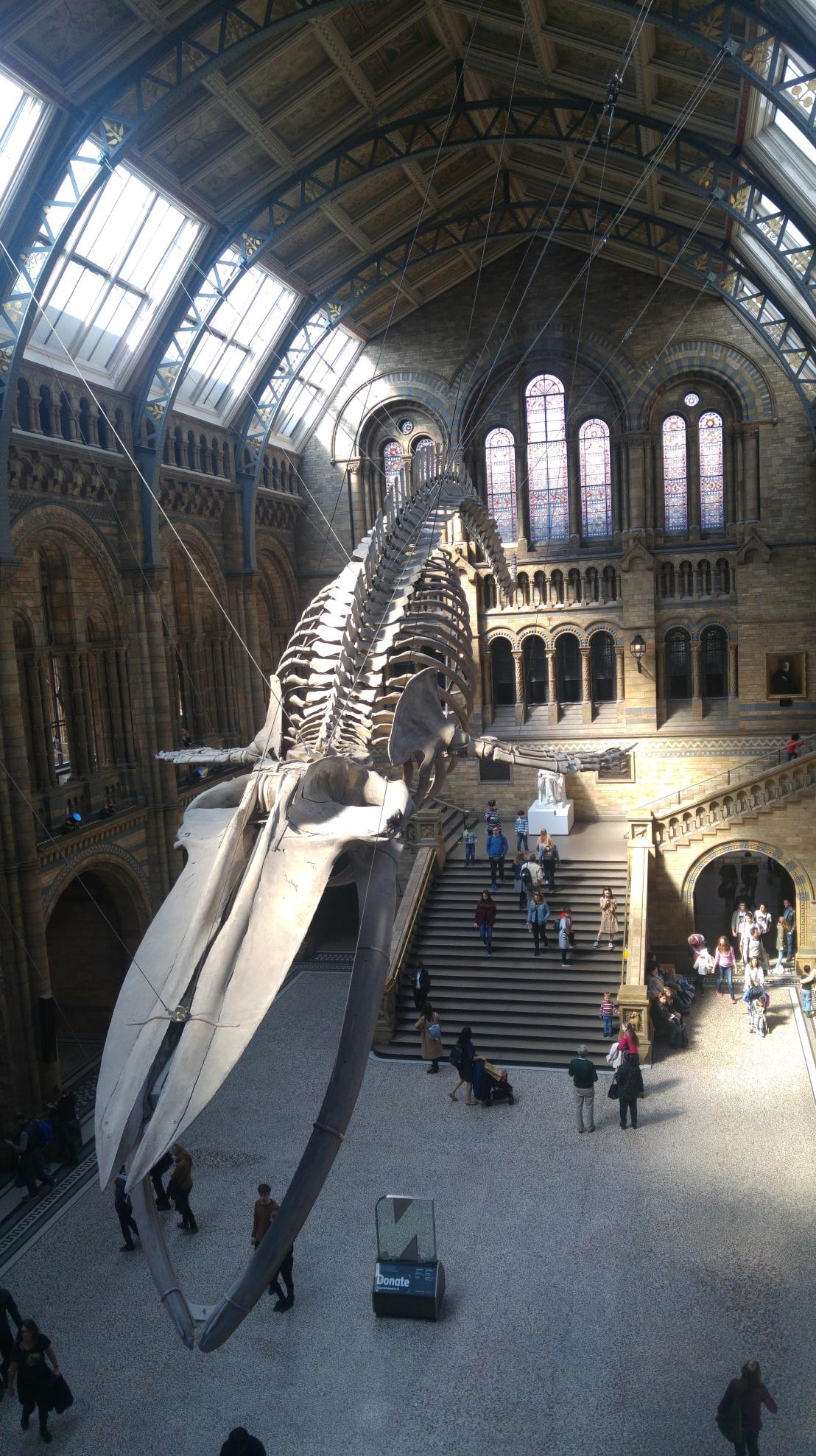 London trip - Natural History Museum