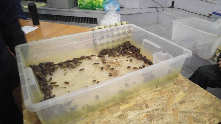 Exotic animal expo- a huge box full of dubia roaches