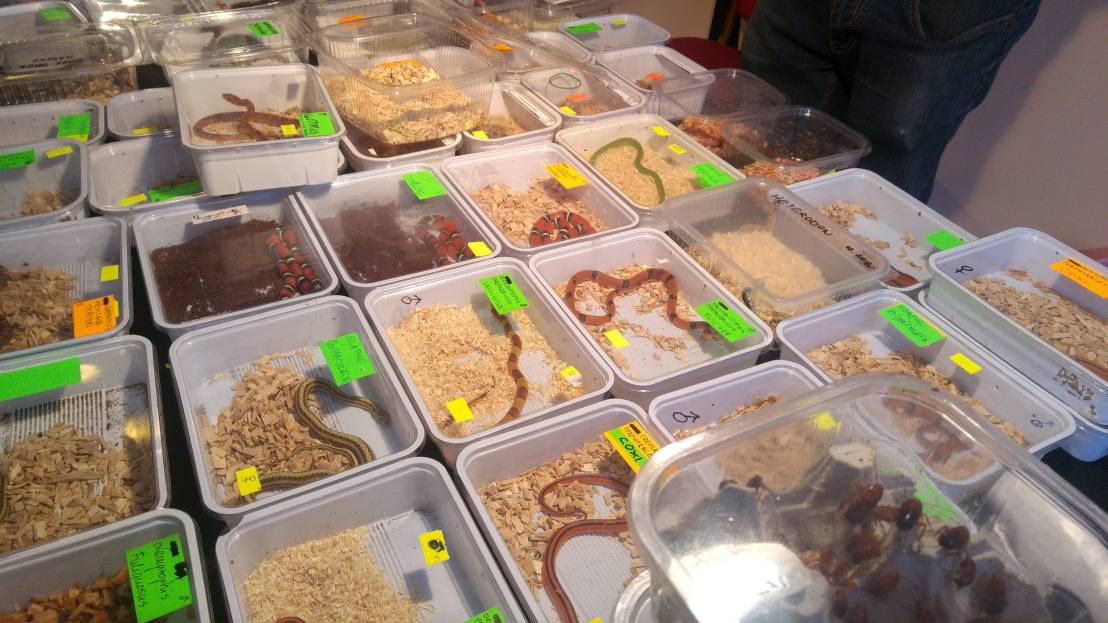 Exotic animal expo - a table full of snakes in containers