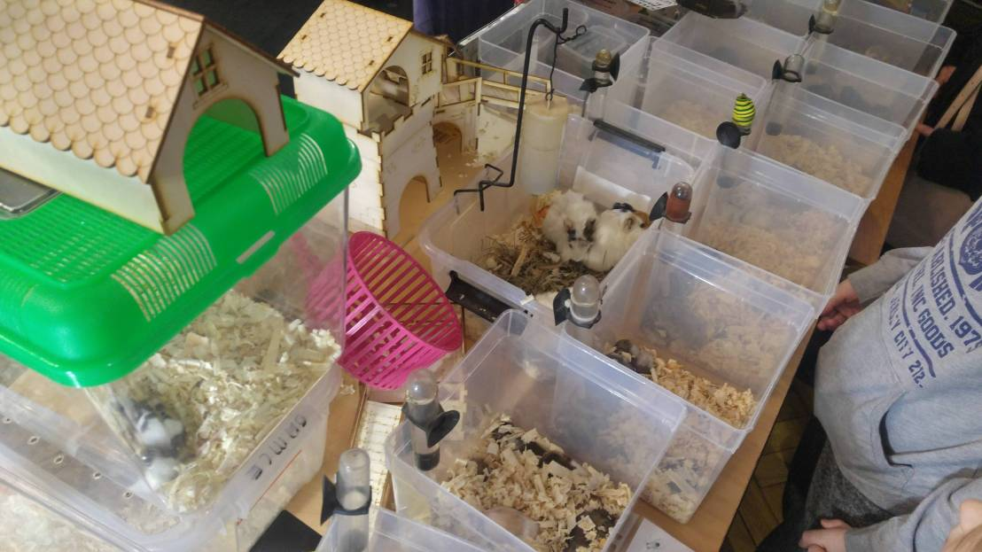 Exotic animal expo - containers with hamsters