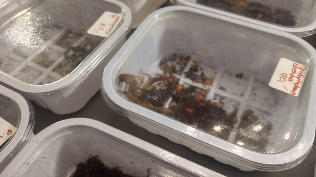 Exotic animal expo - a scorpion in a box
