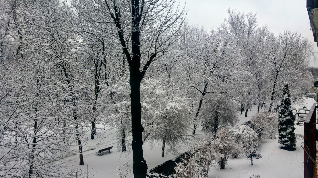 Trees in a park covered with snow