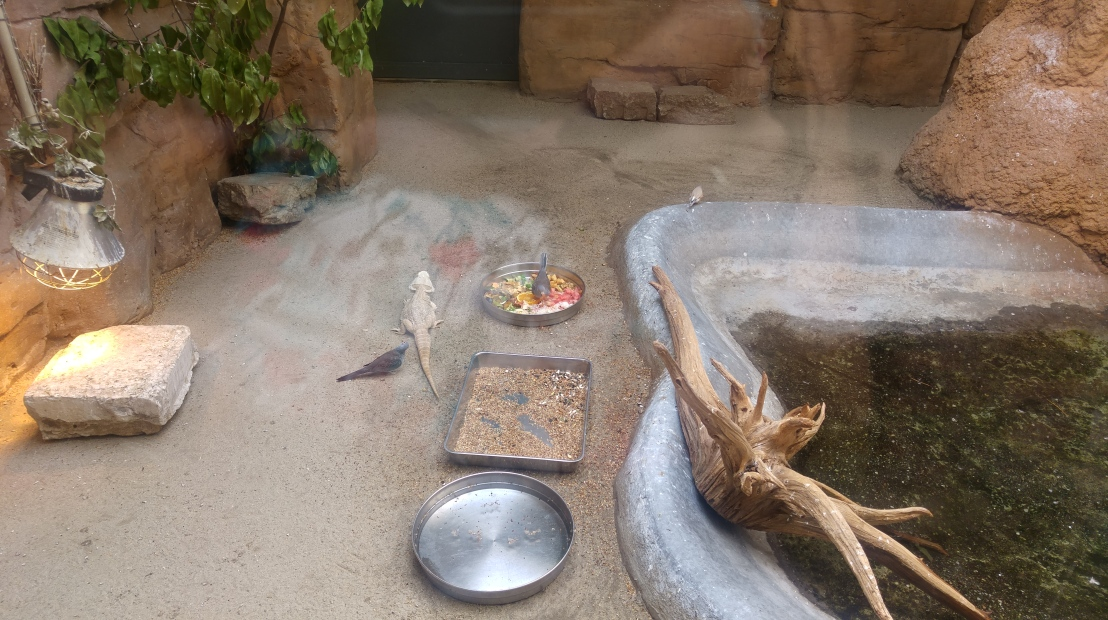 A big enclosure with a bearded dragon, a heat lamp and a mini pond