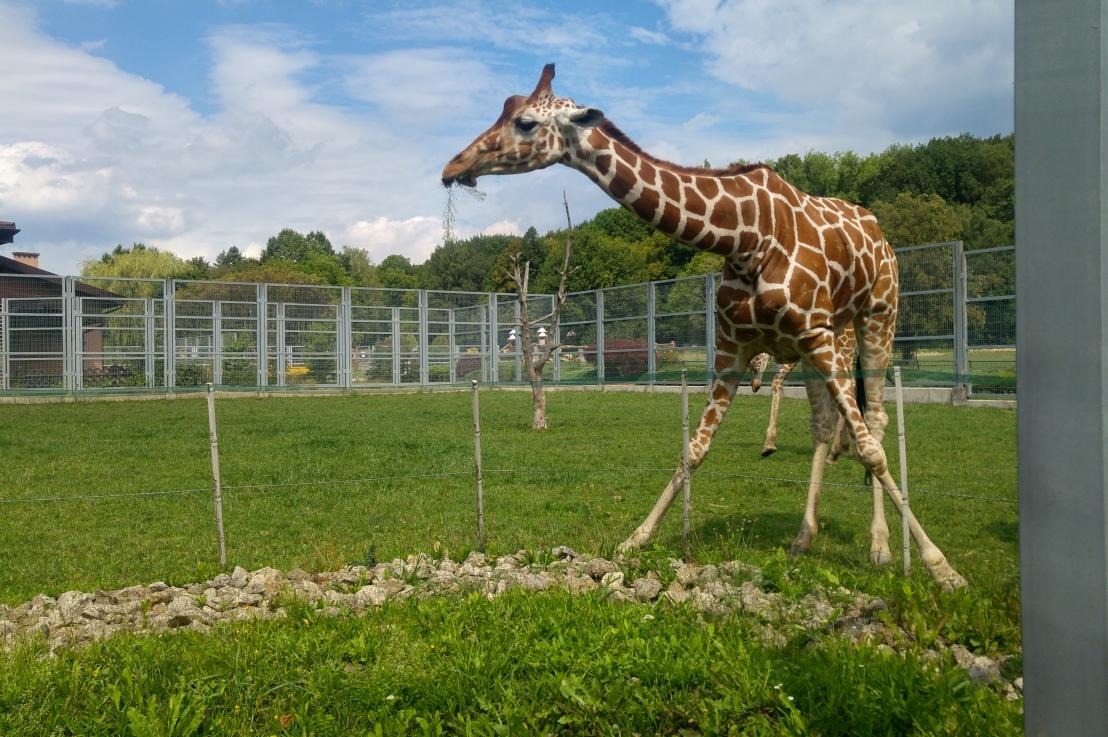 Zoo Trip – Chorzów,Poland
