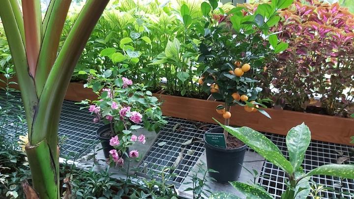 indoor-gardens-palmiarnia-gliwice-3.jpg