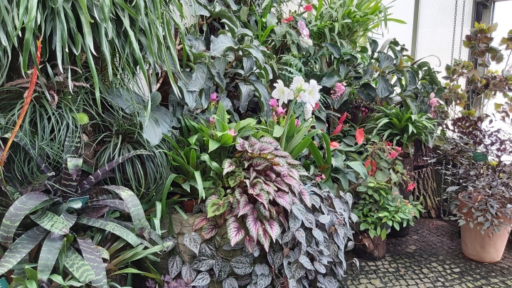 Big house plants in the indoor gardens