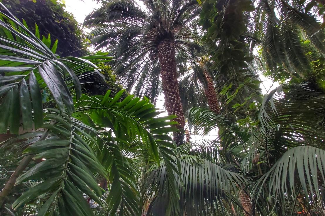 Indoor Gardens – Palm House – Palmiarnia, Gliwice,Poland