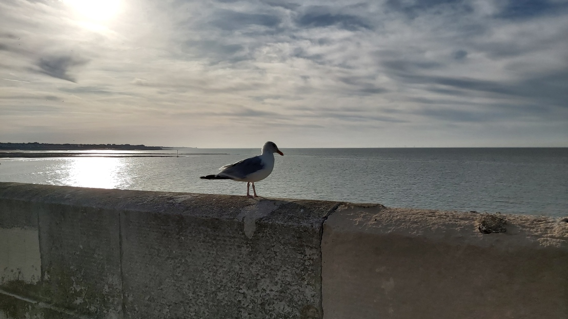 A seagull on a concrete fence, with the sea in the background - Margate