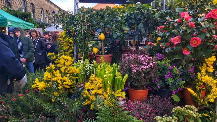 Columbia Road flower market - colourful trees