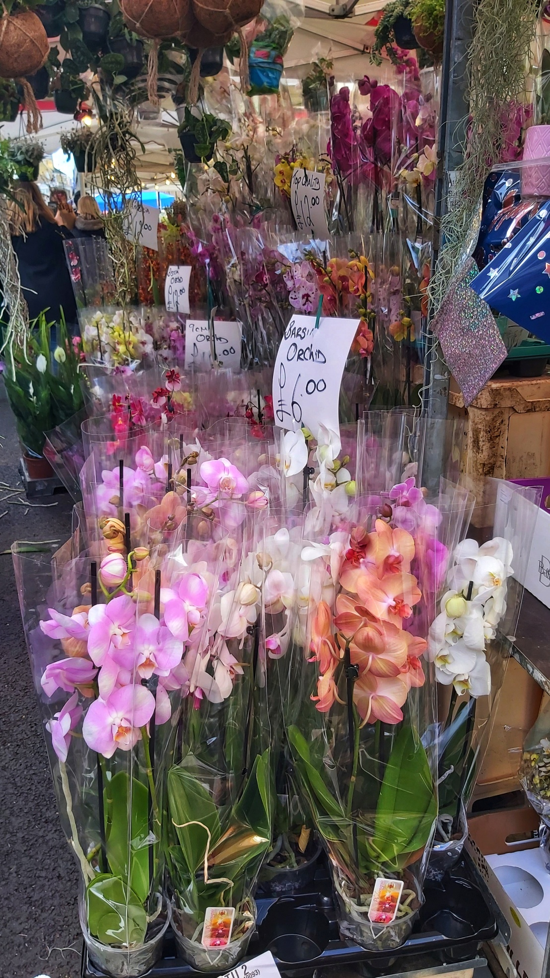 Orchids at Columbia Road flower market
