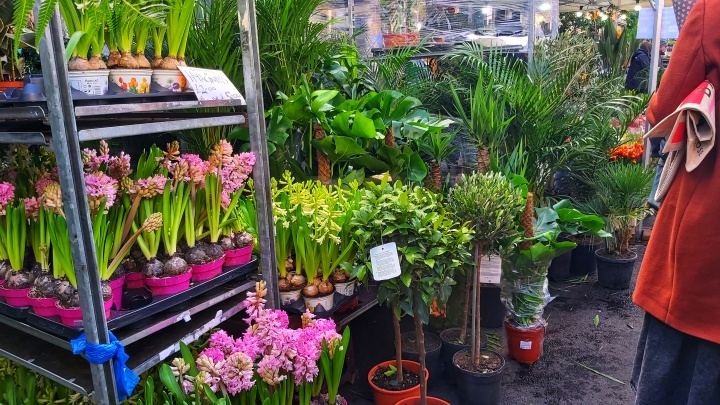 Dragon plants and pink flowers in Columbia Road