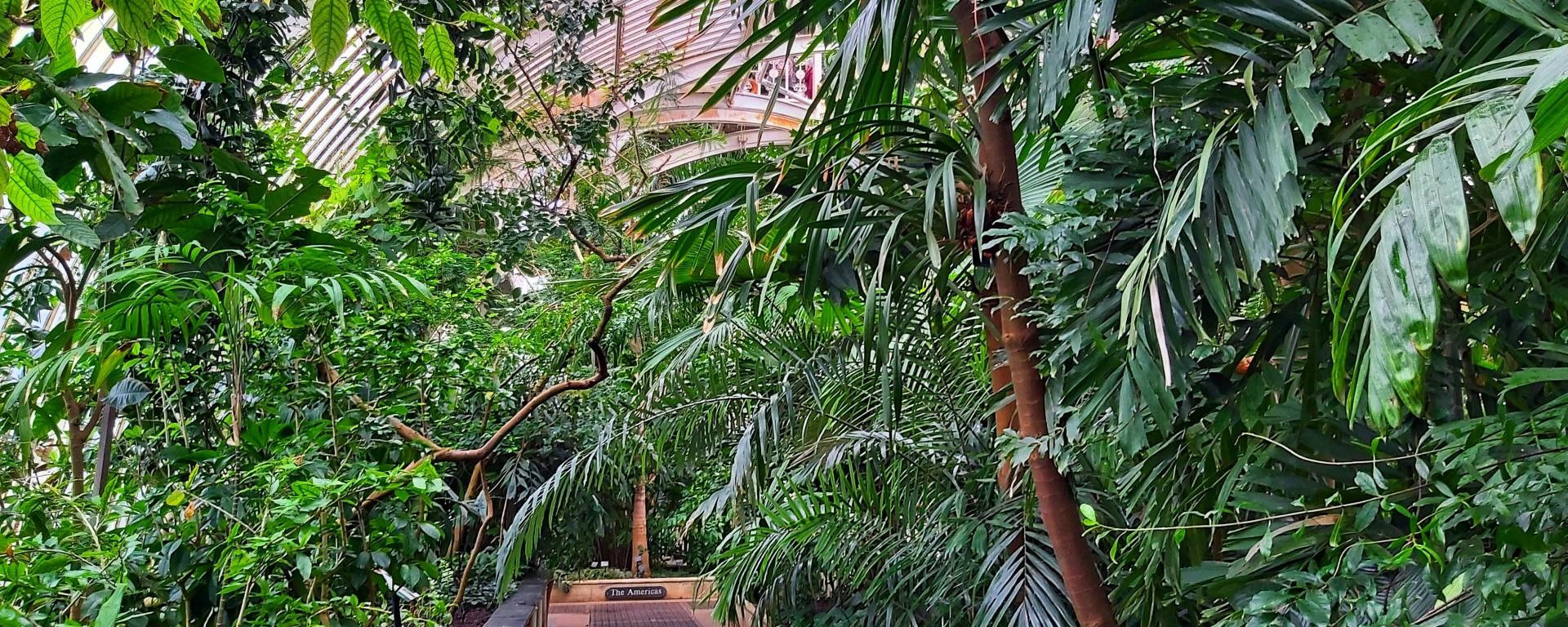 Kew Gardens - tall palm trees