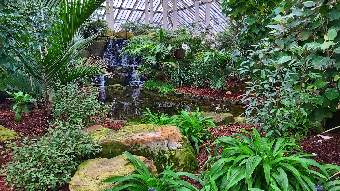 A pond with waterfall surrounded by plants