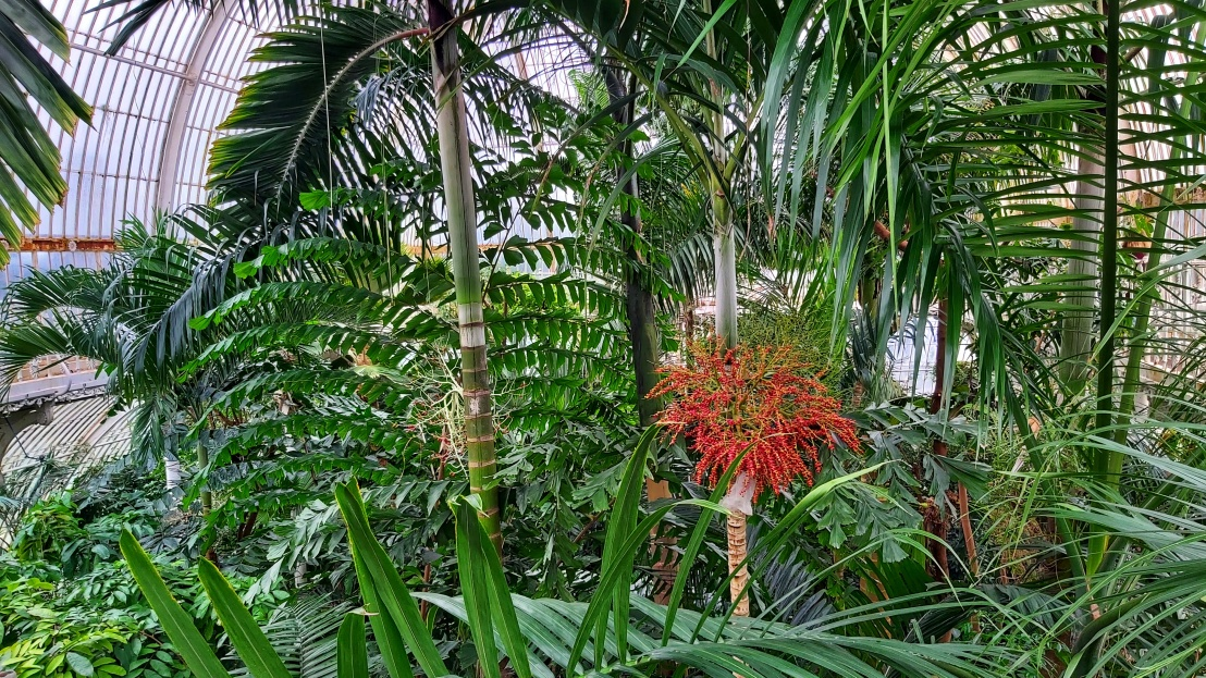 Tall palms and bamboo