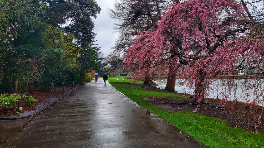 Kew Gardens in the rain - pink trees outdoors