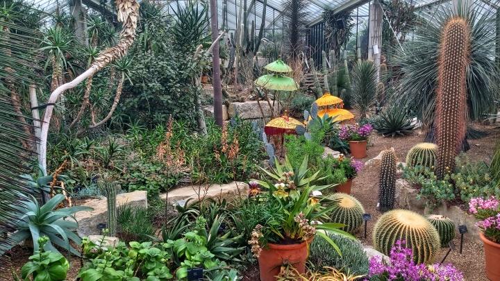 Big cacti in Kew Gardens in London