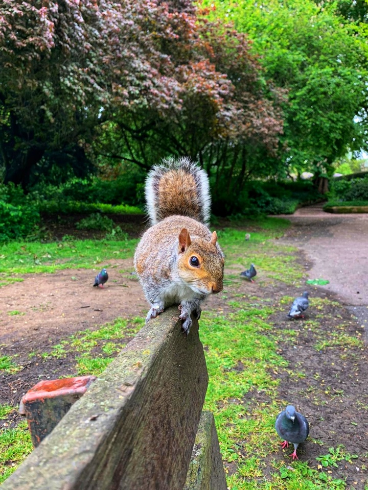 A red squirrel on top of a bench in a park