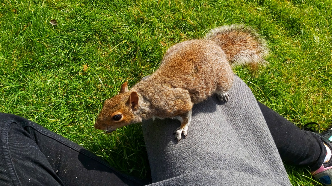 A curious squirrel of Ruskin Park on my leg