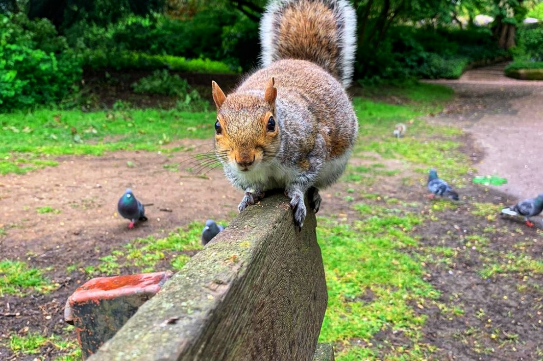 The Squirrels of RuskinPark