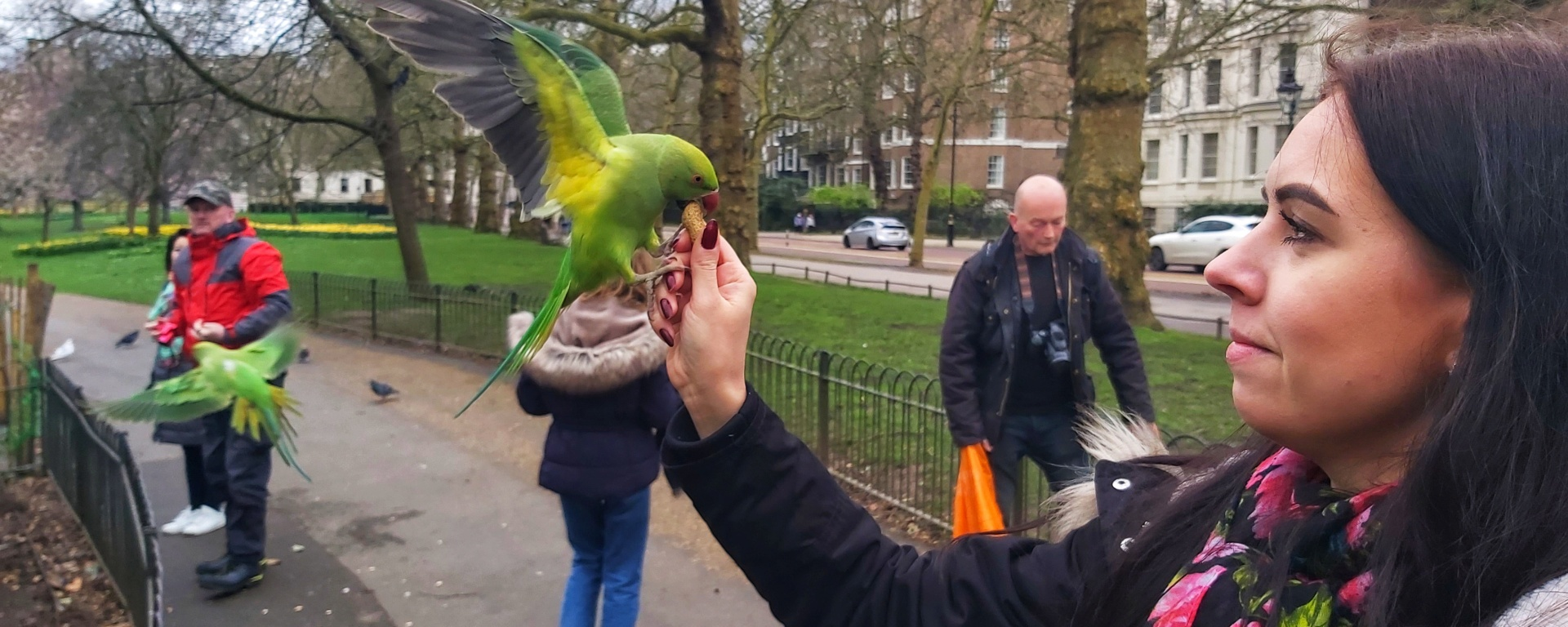 Holding a green parrot in St James's Park, London