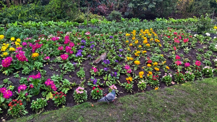 Colourful flowers and a squirrel in St James's Park