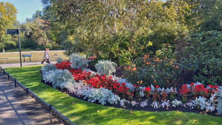 Colourful flowers in Regent's Park in London