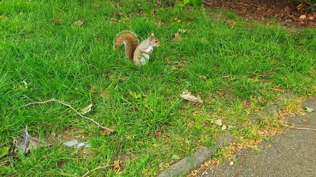 London parks - West Ham Park - squirrel