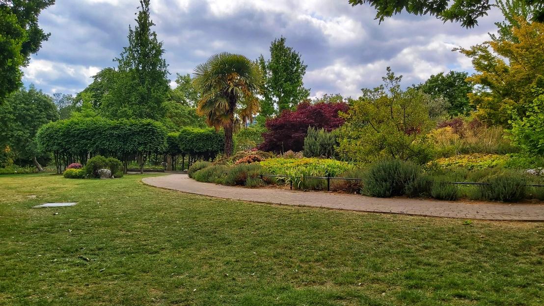 London parks - West Ham Park - palm tree