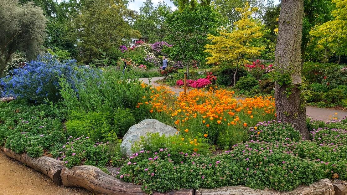 London parks - West Ham Park - orange flowers