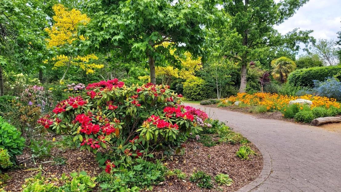 London parks - West Ham Park - red flowers