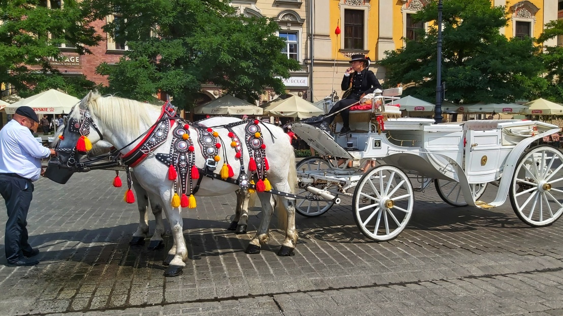 Cracow Trip - white horse and a carriage on the market square