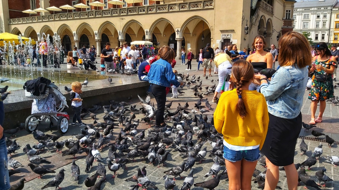 Cracow Trip - pigeons on the main market square