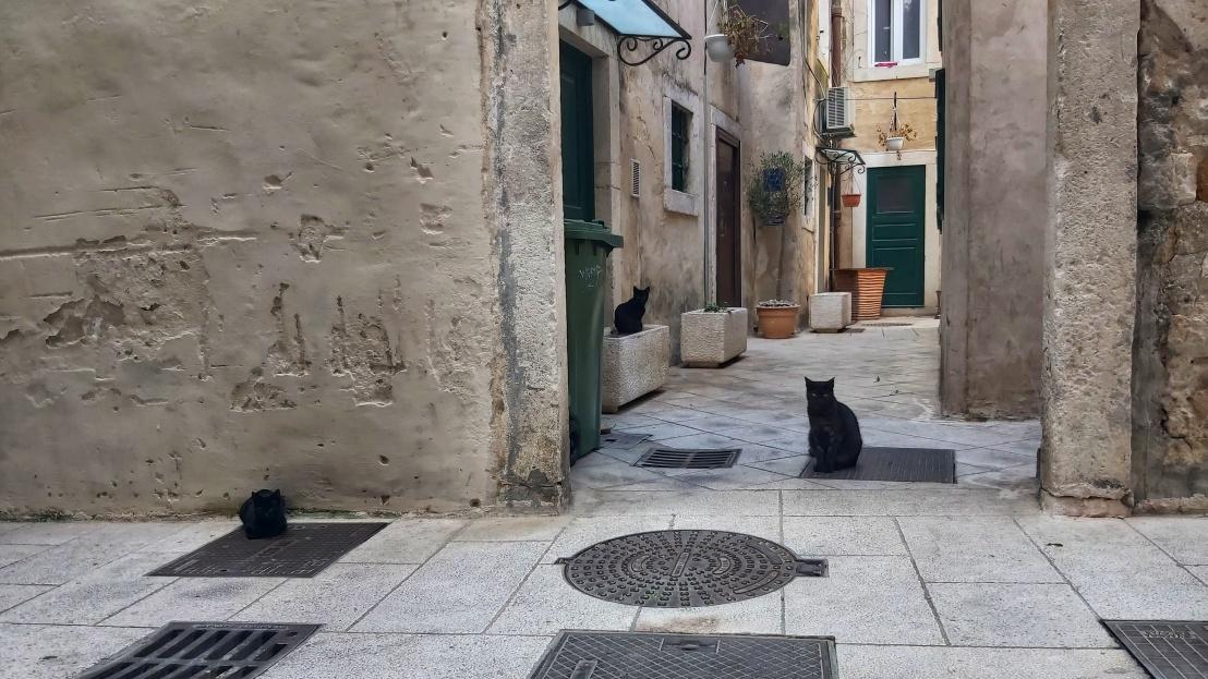 Stray cats in Split, Croatia