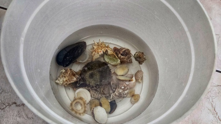 Seashells in a bucket with water and bleach
