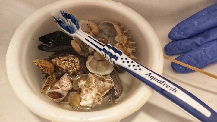 Cleaned seashells in water, gloves and a toothbrush
