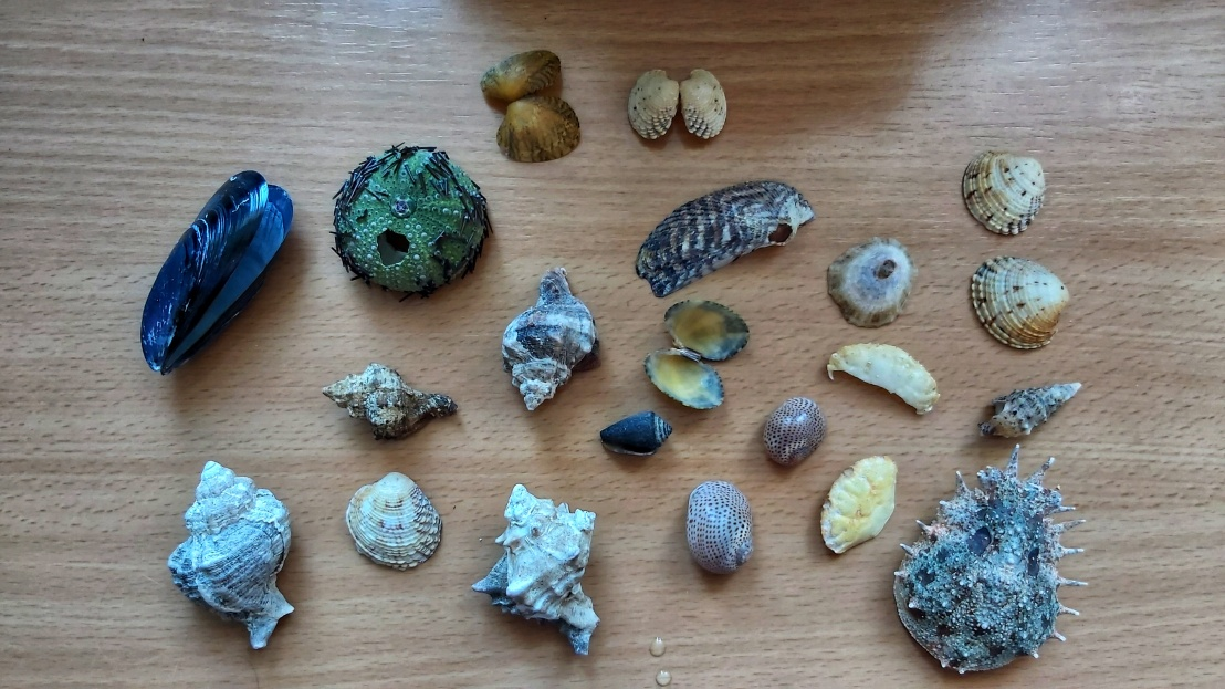 All of the seashells, cleaned in bleach