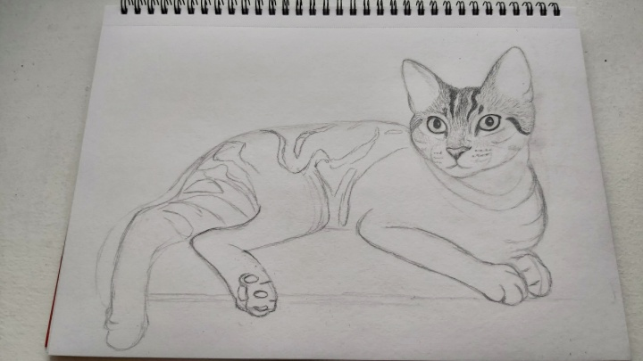 Cat pencil sketch - head started