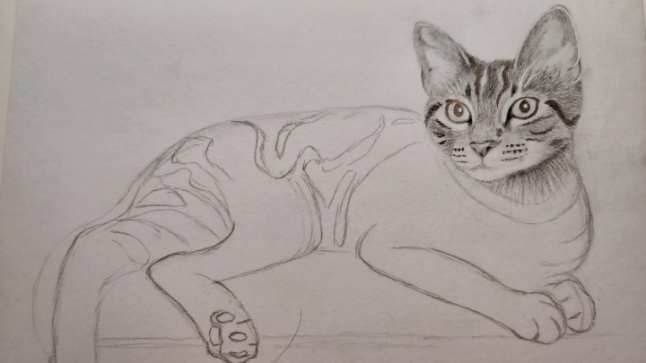 Cat pencil sketch - head finished