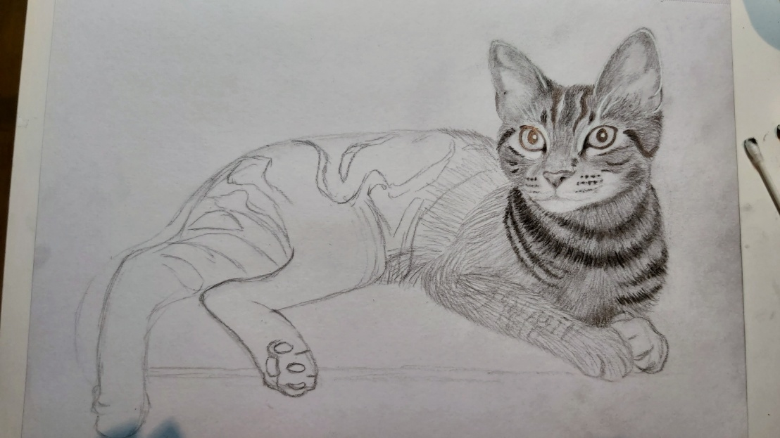 A cat sketch - head and neck done