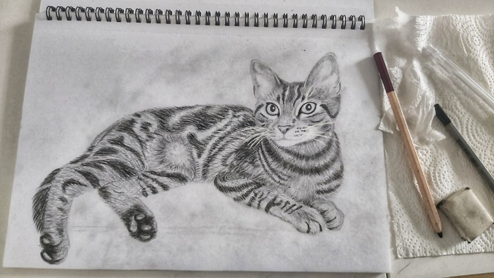 Cat Pencil Sketch - full cat finished