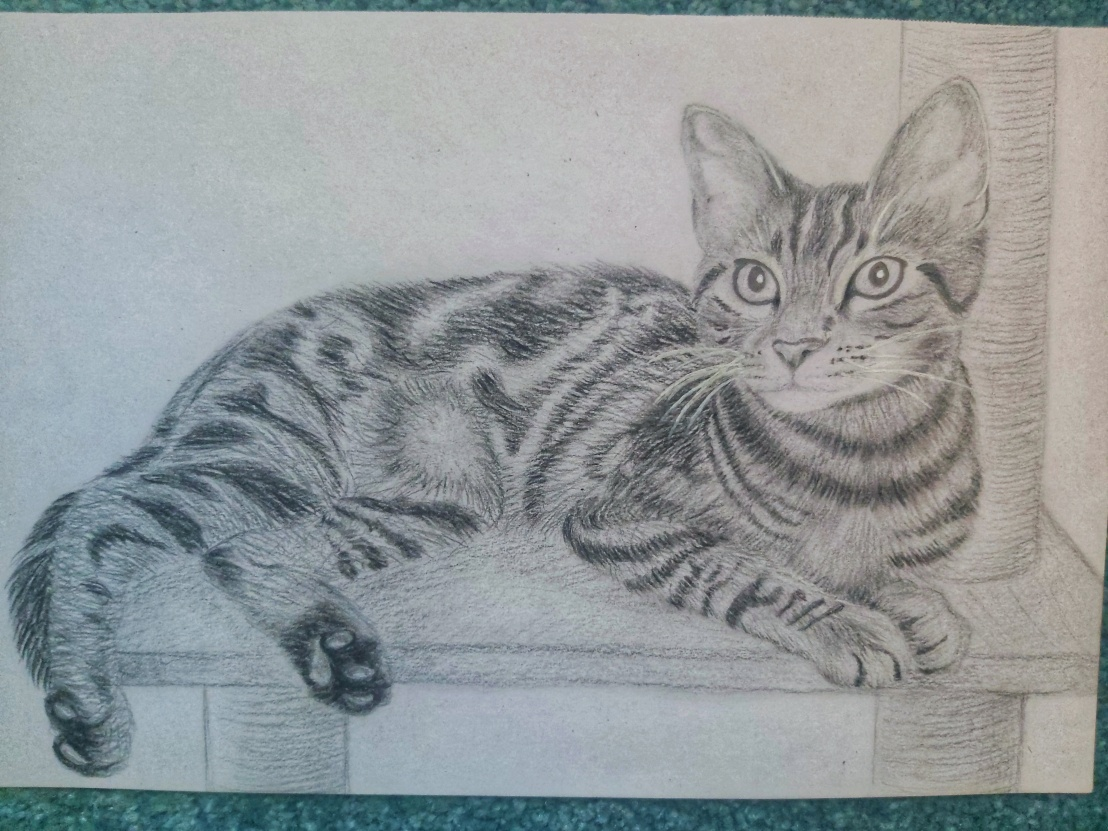 Cat Pencil Sketch finished