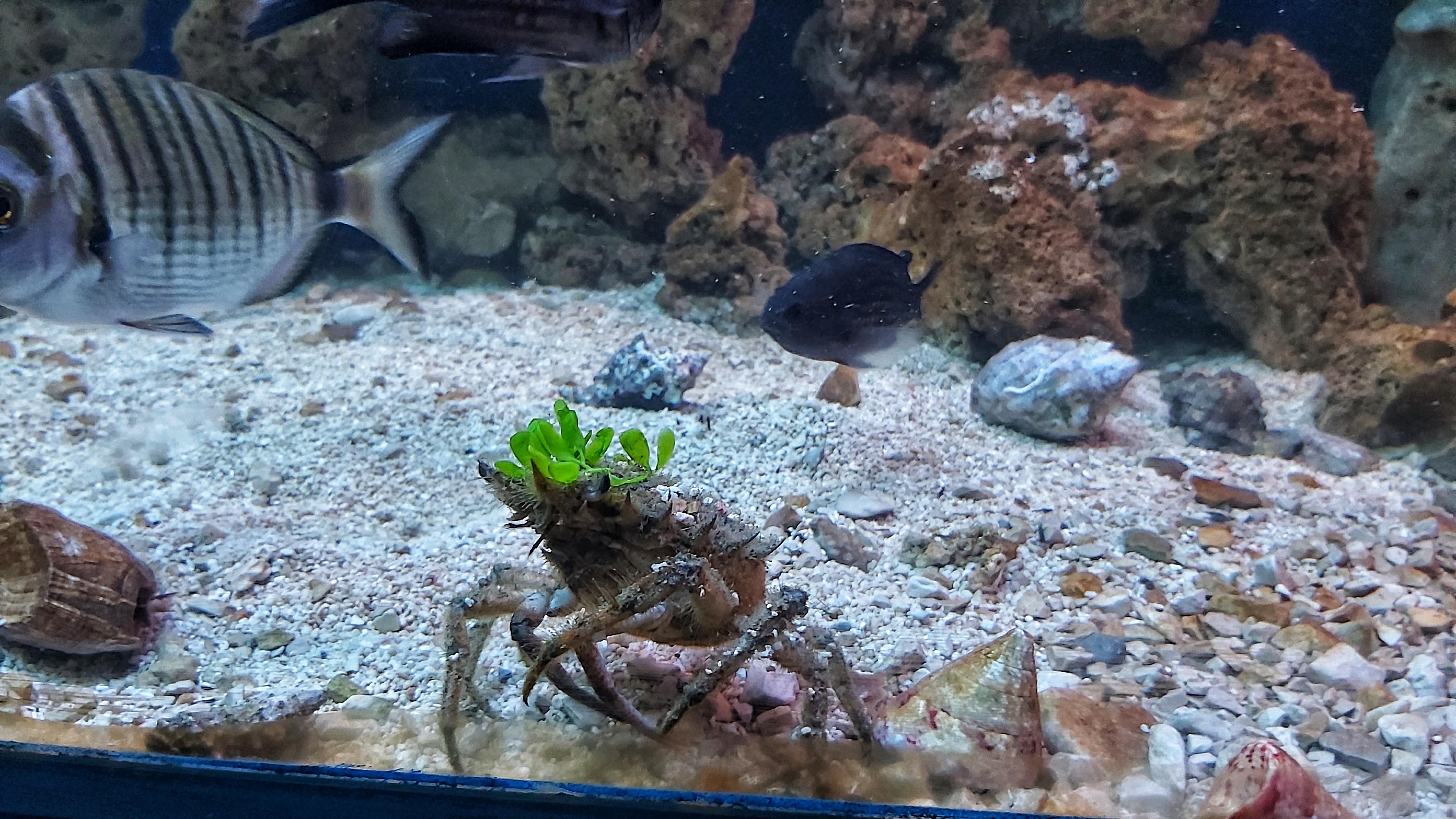 Croatia Sibenik Aquarium