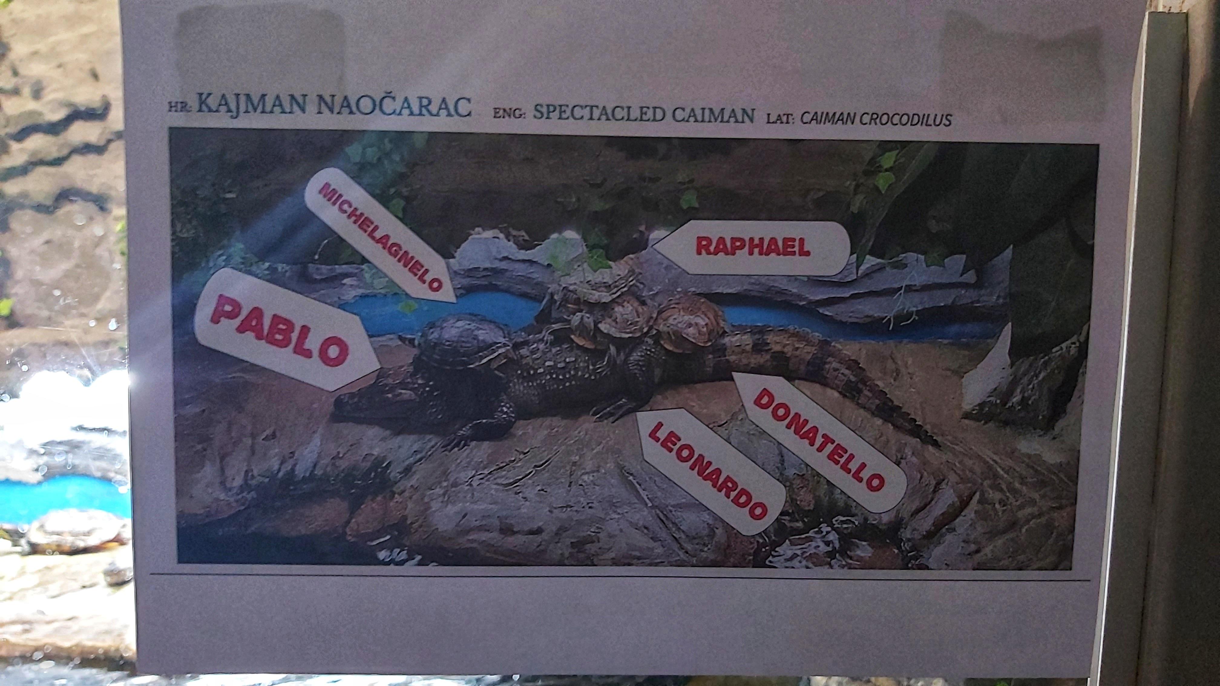 Croatia Sibenik Aquarium Caiman With Turtles